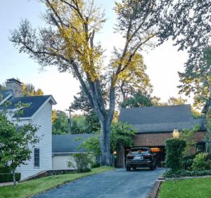 Brookside Tree Removal
