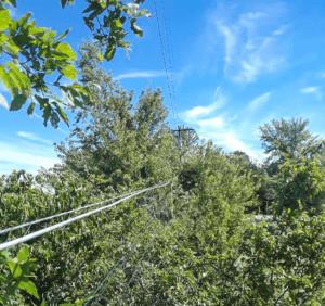 Line Clearing Sapulpa