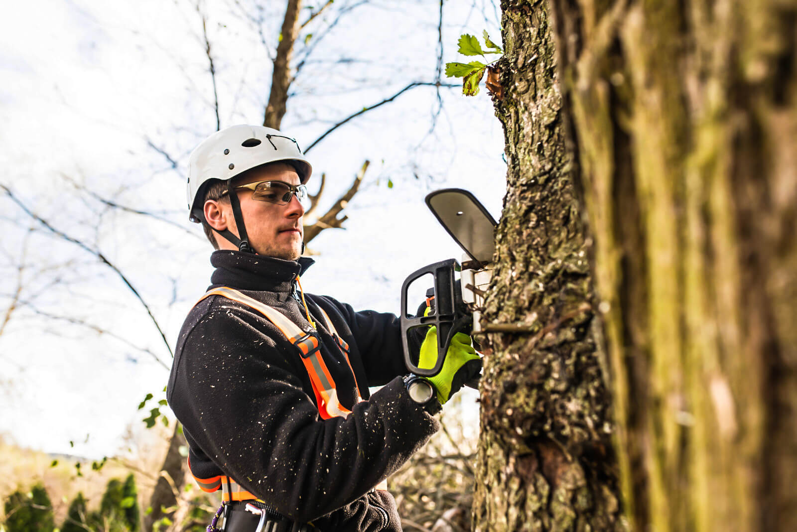Tulsa Tree Services 2