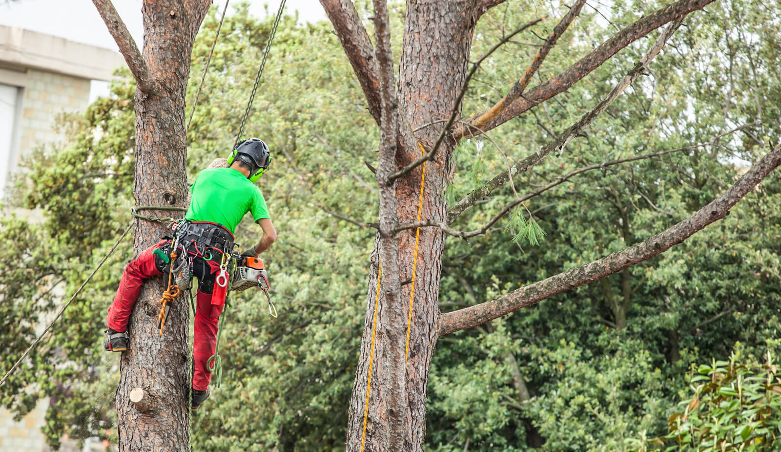 Tulsa Tree Services 4